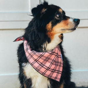 Dusty Dog Bandana from Woof and WIld