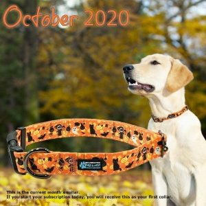 Monthly Dog Collar Club from Max & Neo