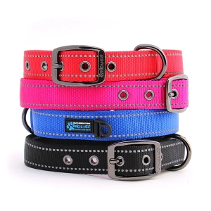 Max Dog Collar from Max & Neo