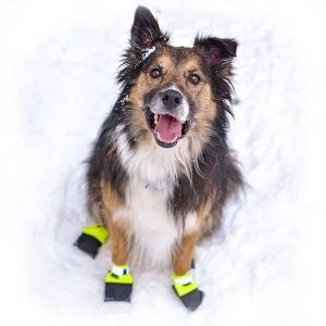 Dog Booties from Wilderdog