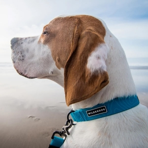 Waterproof Dog Collar from Wilderdog