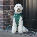 Custom Waxed Canvas Dog Jacket from Wag Theory