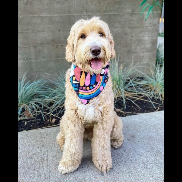 Reversible Dog Bandana from Wag Theory